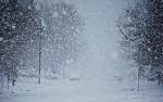 neige levis france roseberry-61139